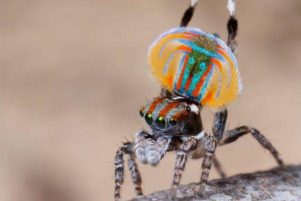Uimitorul link-ul unic de păianjen, Speed dating londra