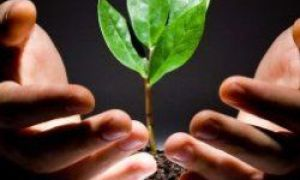 10 plantas domésticas que liberam oxigênio mesmo à noite