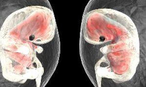 Oamenii de știință au clonat mai întâi embrioni umani