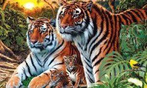 Kolik TIGERů vidíte na obrázku?