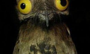 Niesamowity ptak – szary gigantyczny potwór