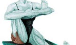 Anatomia de întindere: exerciții pentru întregul corp în imagini