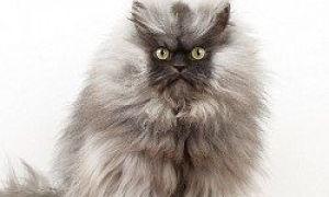 Die flauschigste Katze der Welt und andere berühmte Katzen