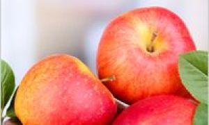 Co vařit s jablky
