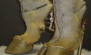 Moda estranha: sapatos de grife que vai fazer você sorrir