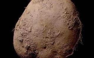 O imagine a unui cartof vândut pentru 1 milion de dolari