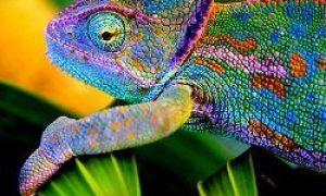 10 najbardziej kolorowych zwierząt