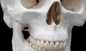 Dlaczego zęby nie są uważane za kości?
