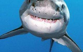 10 úžasných faktů o žralokech, o kterých jste nevěděli